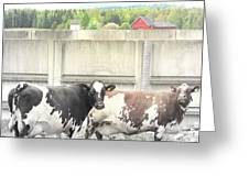 In The Future We Will Have No Cow Fence  Greeting Card