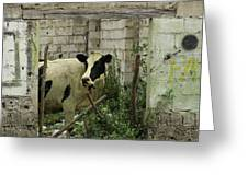 Cow In A Building Greeting Card