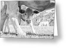 Cow Milk Greeting Card