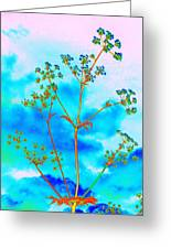 Cow Parsley Blossom 2 Greeting Card