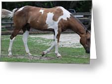 Cow Spotted Horse Greeting Card
