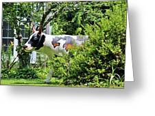 Cow Statue Greeting Card