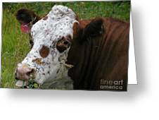Cow Tongue Greeting Card