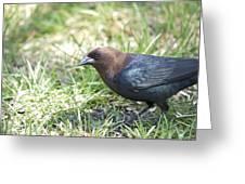 Cowbird Greeting Card