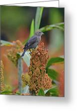 Cowbird Feasting On Milo And Shiloh Military Park In Tennessee Greeting Card