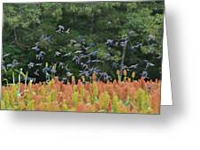 Cowbirds In Flight Over Milo Fields In Shiloh National Military Park Greeting Card
