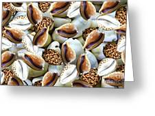 Cowrie Greeting Card