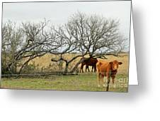 Cows 015 Greeting Card