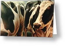 Cows 1 Greeting Card