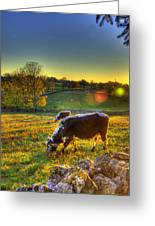 Cows And Stone Fences Greeting Card