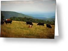 Cows At Doughton Park Greeting Card