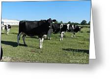 Cows In A Row Greeting Card