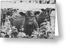 Cows In Black And White Greeting Card