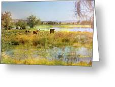 Cows In The Desert Greeting Card