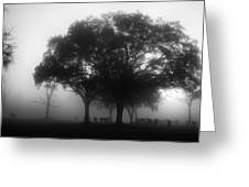 Cows In The Mist Greeting Card by David Mcchesney