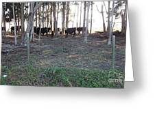 Cows In The Woods Greeting Card