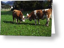 Cows Nuzzling Greeting Card