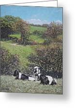 Cows Sitting By Hill Relaxing Greeting Card