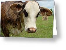 Cows8937 Greeting Card