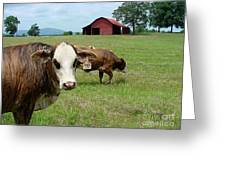 Cows8986 Greeting Card