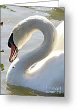 Coy Swan Greeting Card