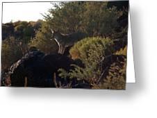 Coyote At The Petrogyphs 2 Greeting Card