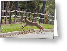 Urban Coyote Greeting Card
