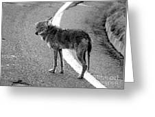 Coyote On The Road Greeting Card