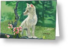 Coyote Pup Greeting Card by Terry Lewey