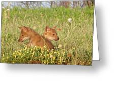 Coyote Pups Greeting Card