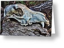 Coyote Skull Greeting Card