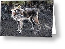 Coyote Waits Greeting Card