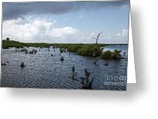 Ominous Clouds Over A Cozumel Mexico Swamp  Greeting Card