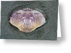 Crab 1 Greeting Card