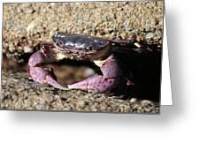 Crab 2  Greeting Card