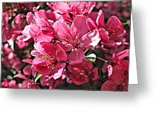 Crab Apple Blossoms 04302015-1 Greeting Card