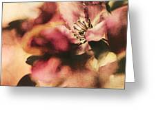 Crab Apple Blossoms IIi Greeting Card