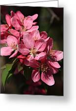 Crab Apple Blossoms Greeting Card