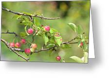 Crab Apple Fruit Greeting Card
