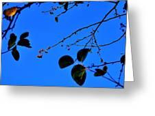 Crab Apples Blue Sky 6510 Greeting Card