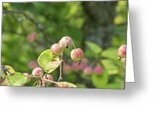 Crab Apples Greeting Card