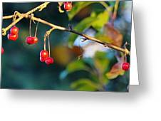 Crab Apples Branches P 6543 Greeting Card