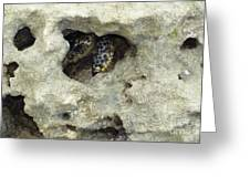 Crab Hiding In A Rock On The Seashore Greeting Card