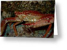Crab With A Snack Greeting Card