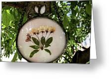 Crabapple Blossoms Greeting Card