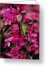 Crabapple Tree Blossoms Greeting Card