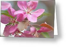 Crabapple Tree  Pink Flowers Greeting Card