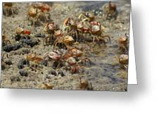 Crabs R Us Greeting Card