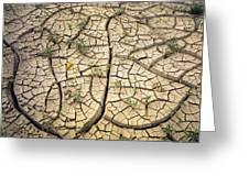 317805-cracked Mud Patterns  Greeting Card