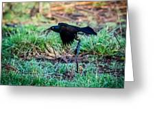 Grackle In The Morning  Greeting Card